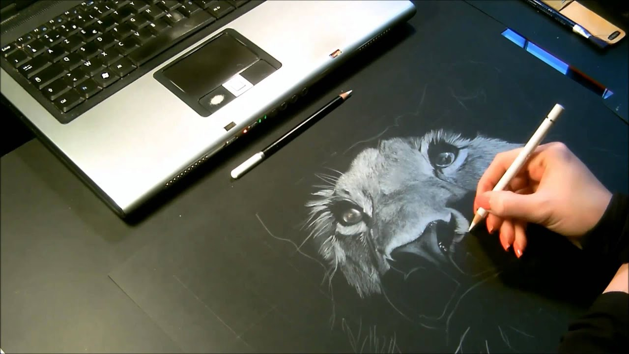 speed drawing dessin lionne crayon blanc sur fond noir youtube. Black Bedroom Furniture Sets. Home Design Ideas