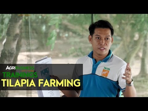Tilapia Farming: Prerequisite for productive Tilapia Farming | Agribusiness How It Works Training