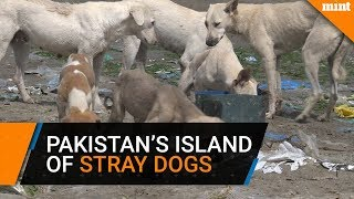 Pakistan's island of strays dogs