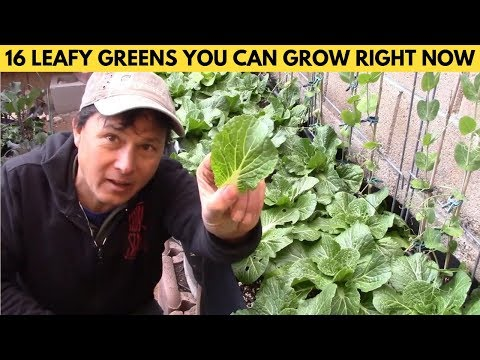 16 Leafy Green Salad Vegetables You Can Grow Right Now