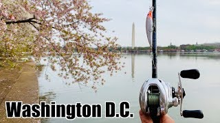 INCREDIBLE Fishing Adventure in Washington D.C. (BASS TRIFECTA!!!)