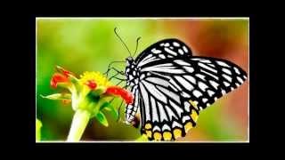 兒 歌 -- 蝴 蝶
