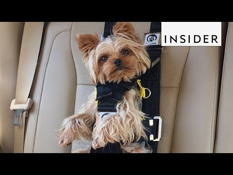 Conversations with Tim Palmer - Car Seat For Your Dog!