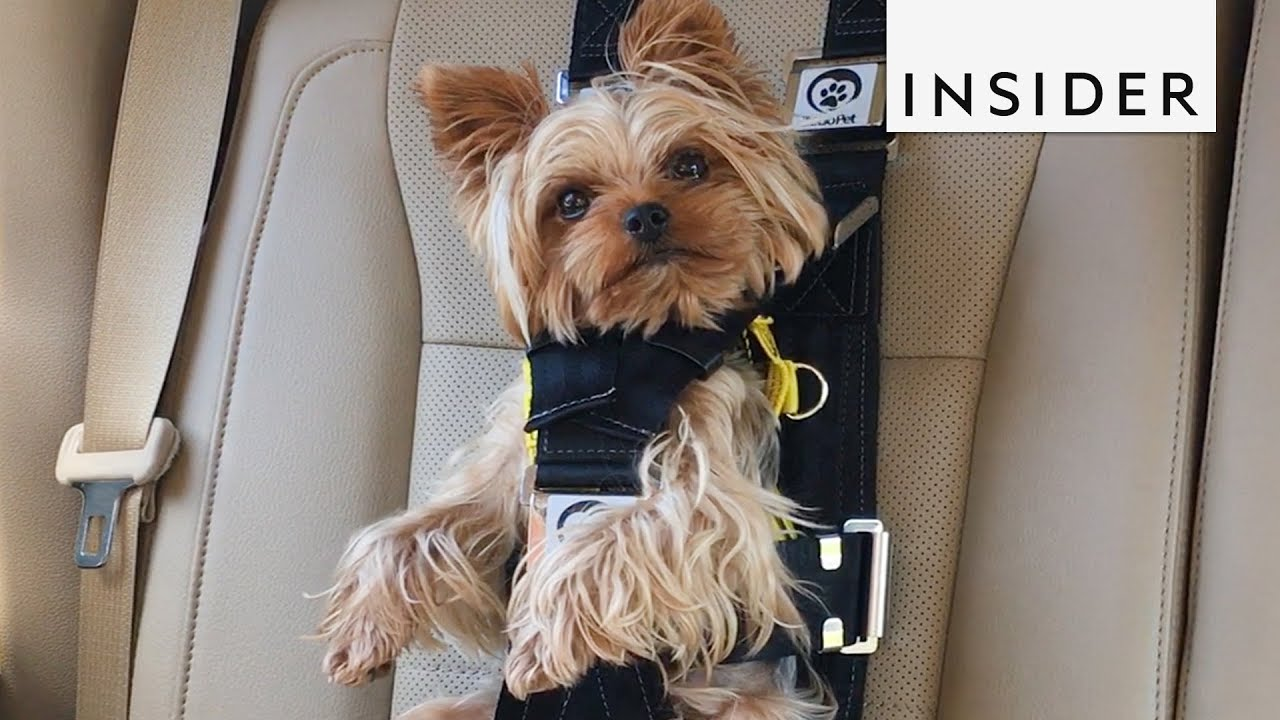 baby chair carrier gym total body workout manual this seat belt keeps your dog safe during car rides - youtube
