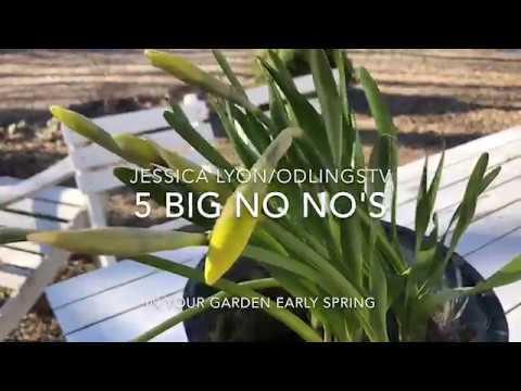 5 Saker du absolut INTE bör göra i din trädgård tidig vår