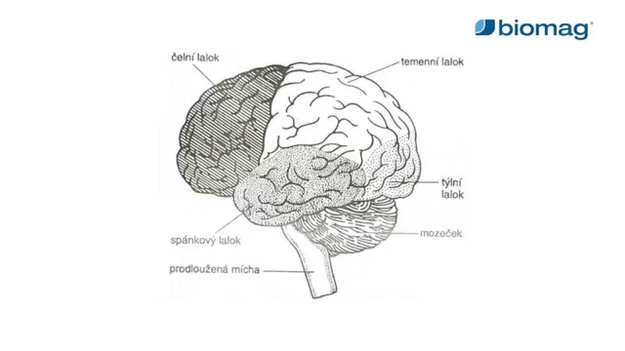 az agy hipertóniás vizsgálata