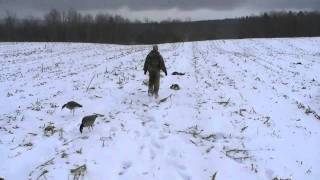 vuclip Waterfowl Hunt with Cadon Outdoors