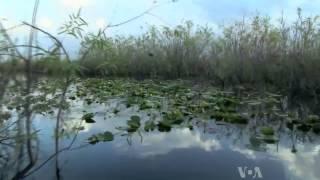 Voices of America: Bill Alvarez, Everglades Guide
