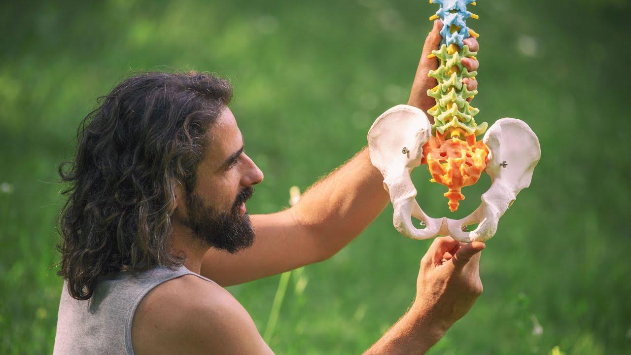 gyomorrák anatómiája