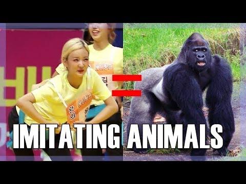 K-POP IDOLS IMITATING ANIMALS
