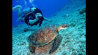 Relaxing Music,Explore Life under the sea 4K| wild nature| Documentary Relaxing Video
