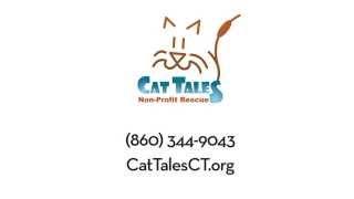 """Ready"" : Cat Tales :60 Adoption TV Spot"