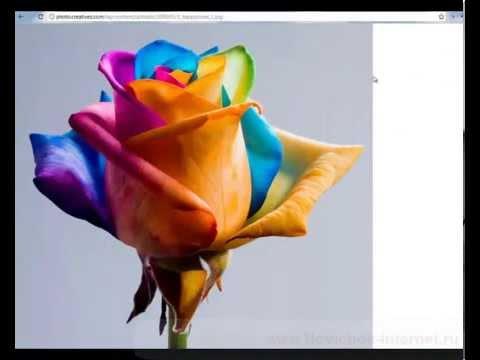 Обучающее видео Как скачивать картинки из интернета