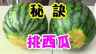 《美好生活VLOG》How to Pick a Sweet Watermelon 秘訣---快速挑西瓜好方法