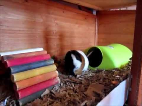 Guinea Pig Hutch Updates & Tours + Piggie Christmas Pressies, Organization and Q+A's!