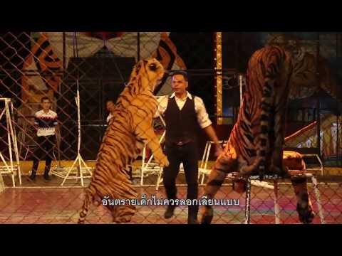 รายการ Zoo Thailand ตอน สวนเสือศรีราชา [ 16 04 60 ]