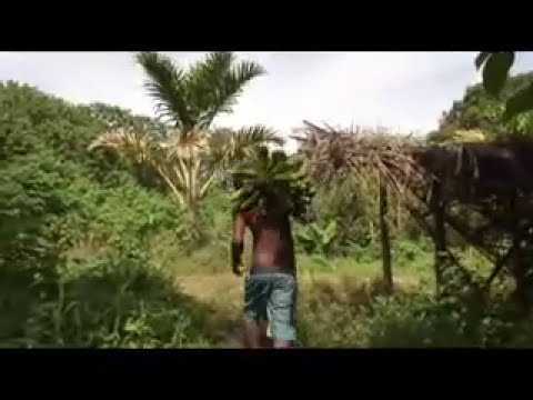 Bananas! extraordinary stories from PNG, Solomon Islands, India from the locals