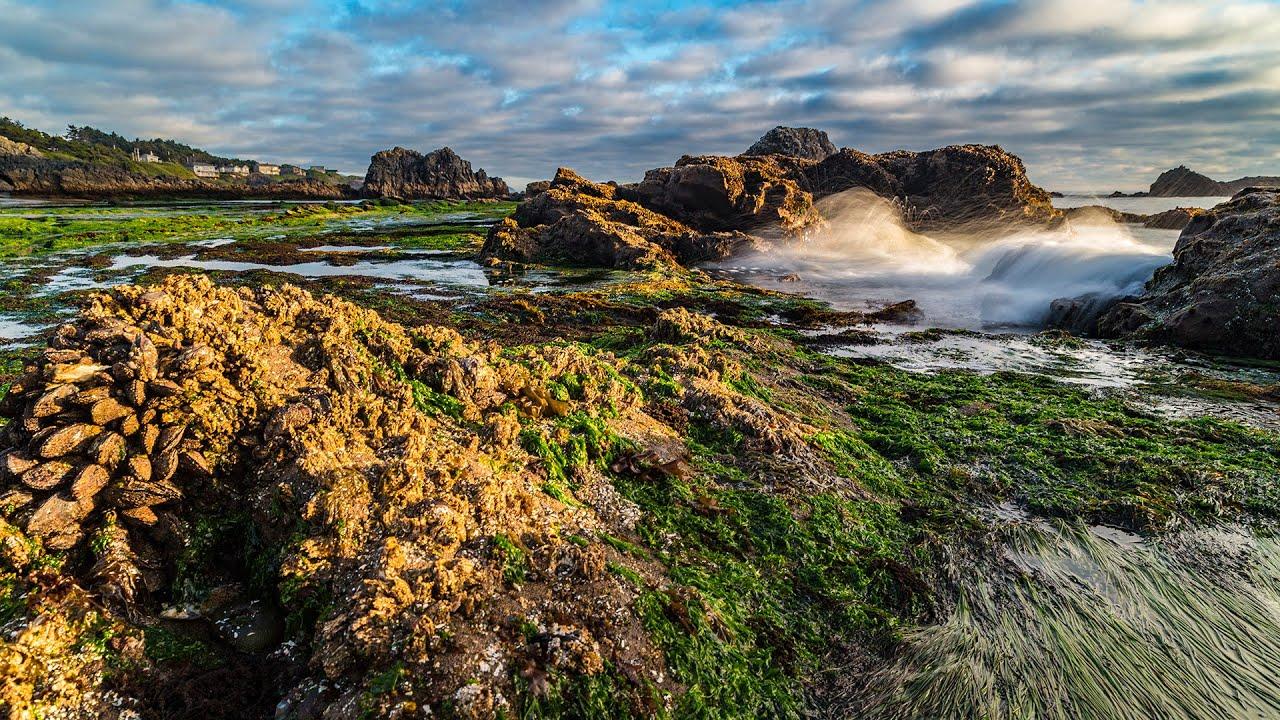 Seal Rock Beach Oregon You