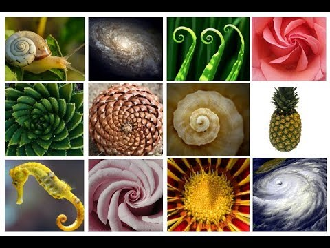 The AMAZING Fibonacci Spiral/Sequence - Extended Version! - YouTube