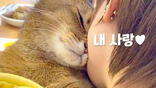 고양이가 집사를 사랑할 때... | 냥자친구 마일로