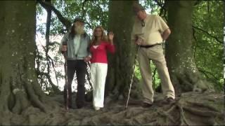 #6 Fairies, Elves and Nature Spirits: Gail Thackray