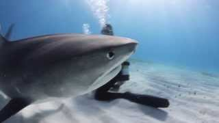 Epic Diving -- Tiger Sharks in The Bahamas