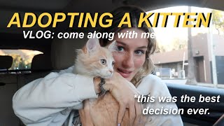 i adopted a cat... because i'm lonely lol