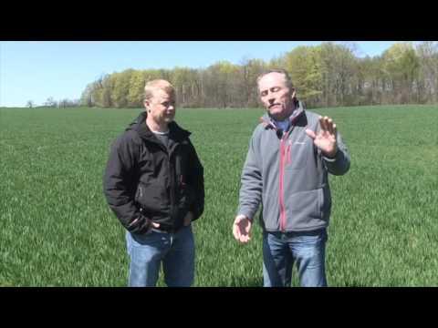 Wheat School -