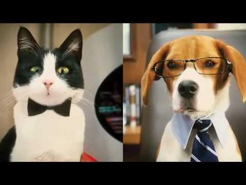 Como perros y Gatos - Trailer 1