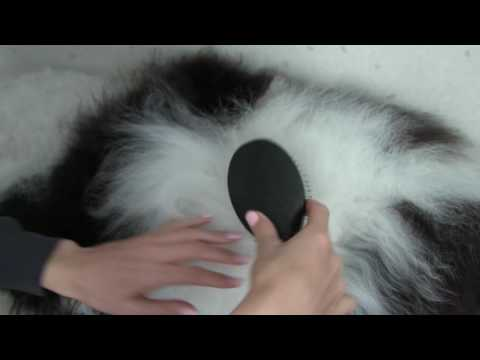 Step 1 of Grooming Your Doodle At Home: Pin Brush Tutorial