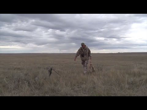 How To Have Success Calling Coyotes In Windy Conditions!