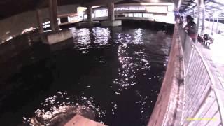 香港釣魚 前打 落入 sportcam sj6000 wifi