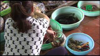 VTC14 | Thực hư công dụng của rượu ngâm hải sản