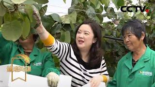 《遍地英雄》 20200520 曾嬿:静海花开香满城|CCTV农业