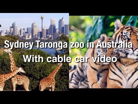Sydney Taronga zoo with cable car video in Australiaসিডনি তরঙ্গ চিড়িয়াখানায় সাথে ক্যেবল গাড়ি ভিডিও।
