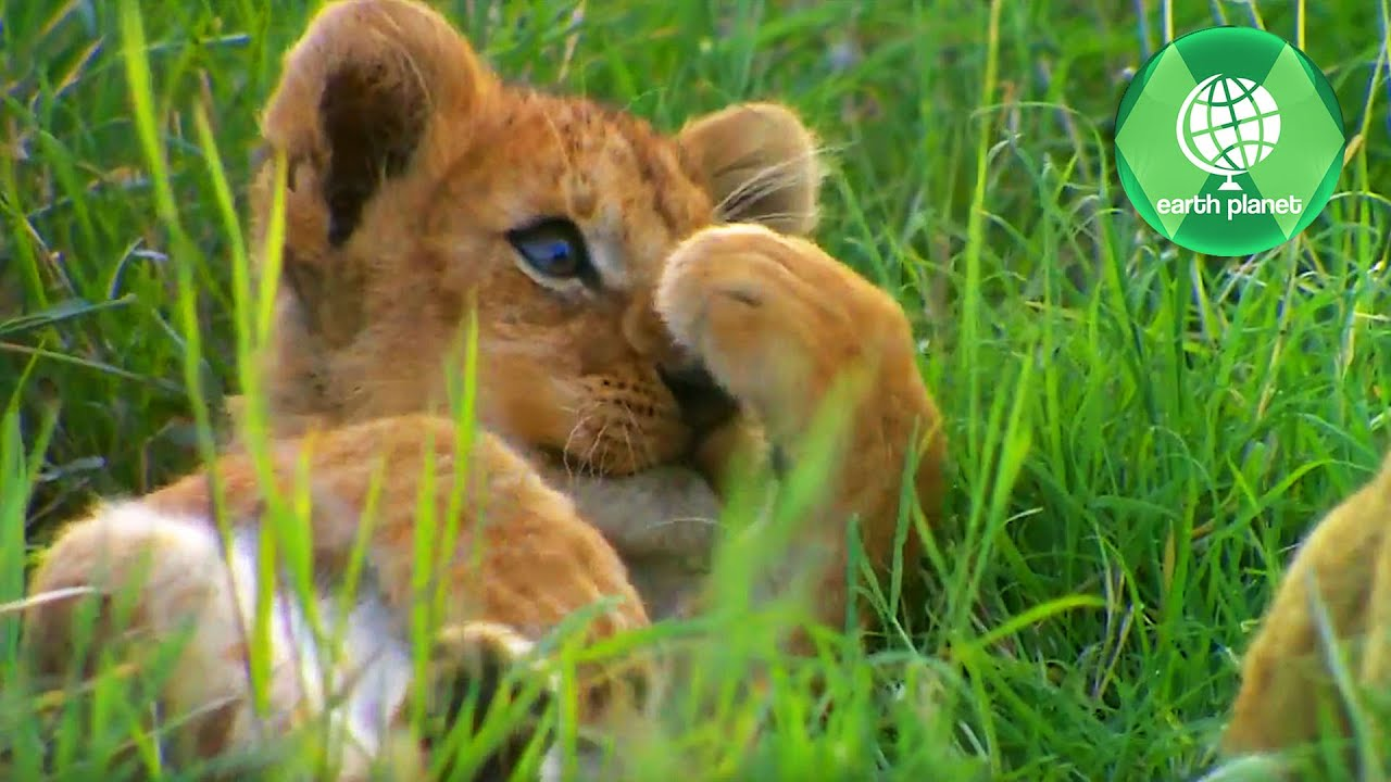 WILDLIFE SERENGETI | PART 3 | HD QUALITY | EN