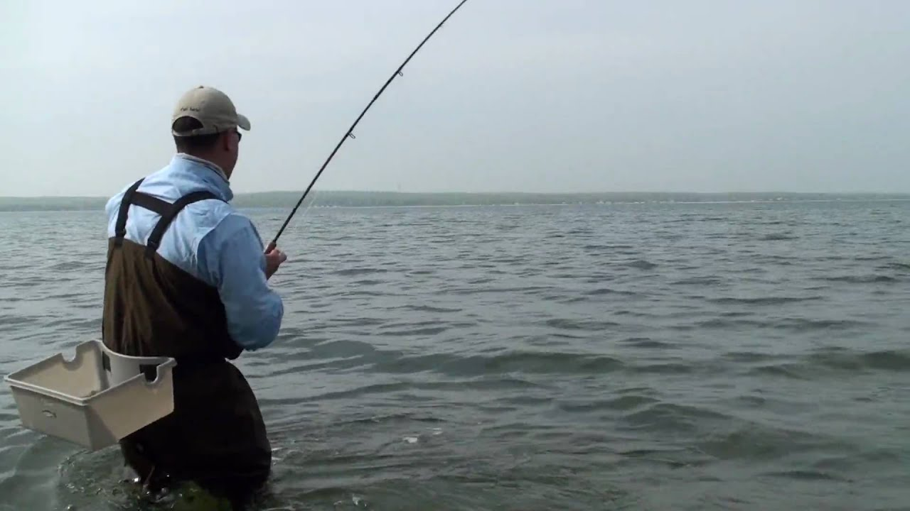 Fly fishing ny long island for striped bass in the ny bays for Free fishing license ny