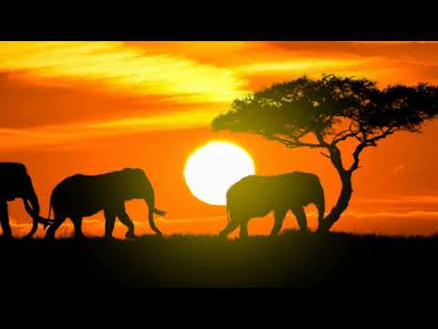 Explore the wonders of our network in Africa | Qatar Airways