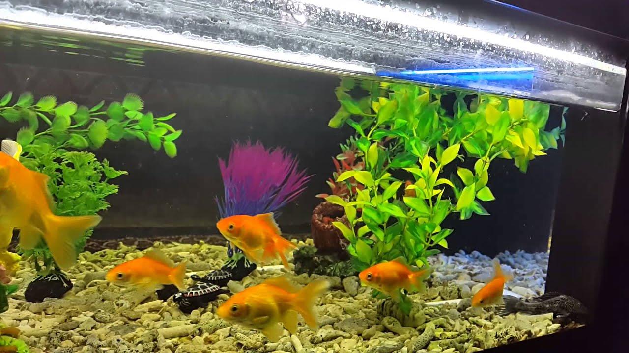 Tea coffee table aquarium