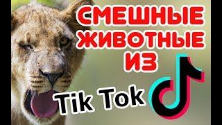 Смешные ЖИВОТНЫЕ из Tik Tok / Funny ANIMALS from Tik Tok