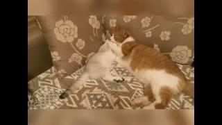 Банный день котенка и сладкий сон.