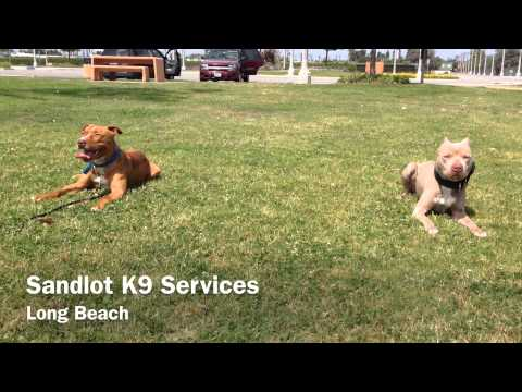 Dog day care doovi for Best dog boarding los angeles