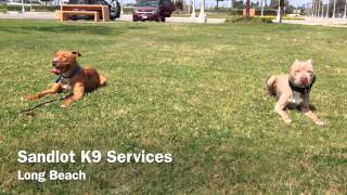 Dog Boarding & Training Los Angeles | Sandlot K9 Services