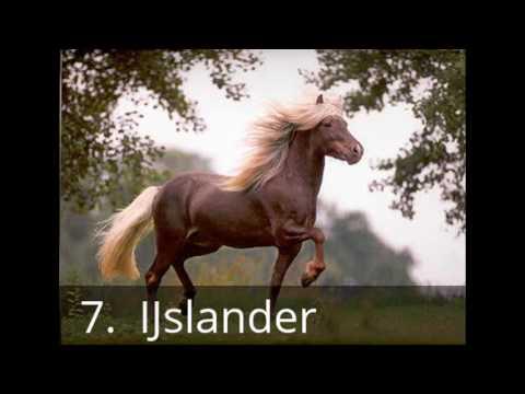 top 10 mooiste paardenrassen