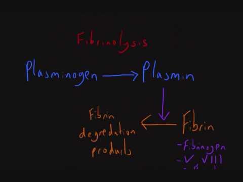 Haemostasis 7: Fibrinolysis