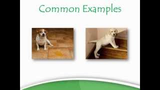 Puppy Training Classes - Puppy Training Classes Reviews