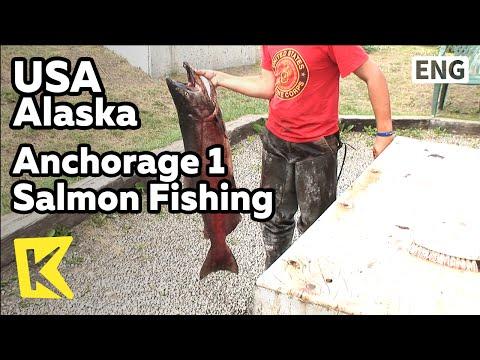 【K】USA Travel-Alaska[미국 여행-알래스카]앵커리지 1 초대형 연어낚시/Anchorage 1 Salmon Fishing/Ship Creek