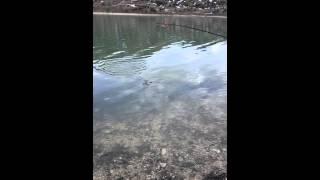 Рыбалка на озере Казеной-ам Чеченская Республика