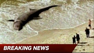 MAJOR MEGALODON DISCOVERY - EXCLUSIVE!