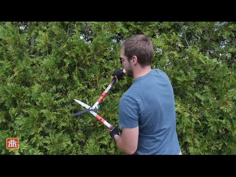 Mark Cullen: How to Prune a Hedge